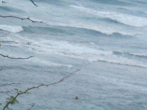 3・ワイキキトロリーからのの海.JPG