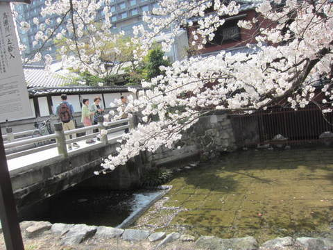 3・高瀬川桜1.JPG
