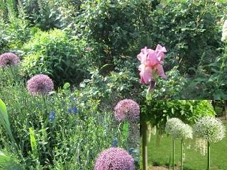 4・花壇の花1.JPG