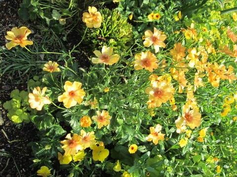 4・黄色い花1.JPG