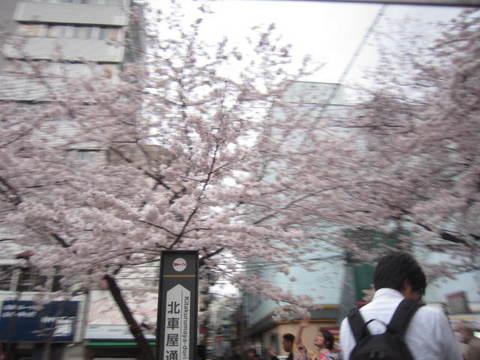 5・高瀬川桜.JPG