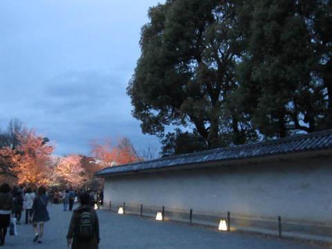 6・二条城夜桜2.JPG