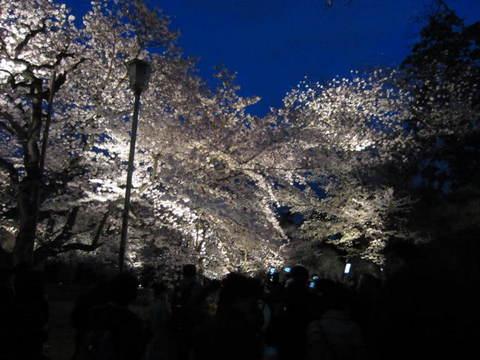 6・二条城夜桜22.JPG