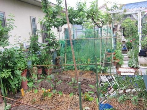 KT野菜園・1.JPG