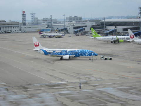 JAL・ジンベイザメ.JPG