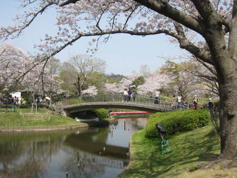 はままつ桜・橋.JPG
