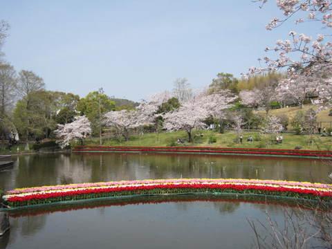 はままつ桜・池1.JPG