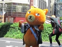 ド祭り2・3ニャンコ.JPG