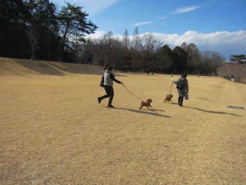 公園・犬.JPG