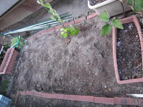 棚・1畳菜園.JPG
