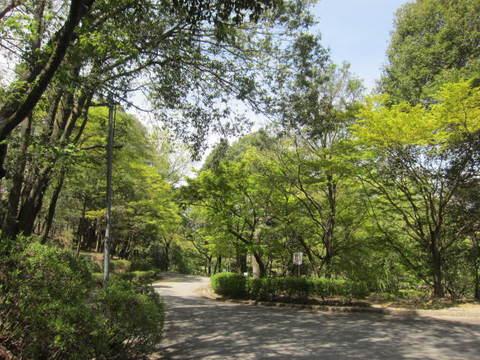 森林公園.JPG