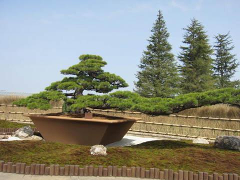 盆栽・3.JPG