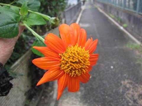 赤い花・2.JPG