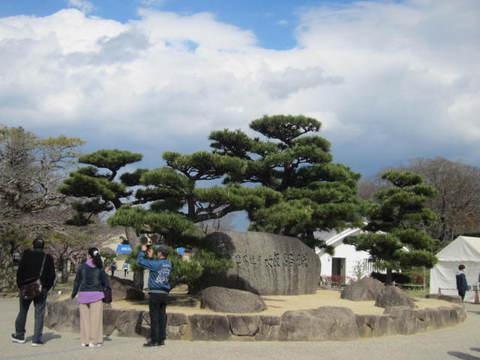 2の10帰路松の木.JPG