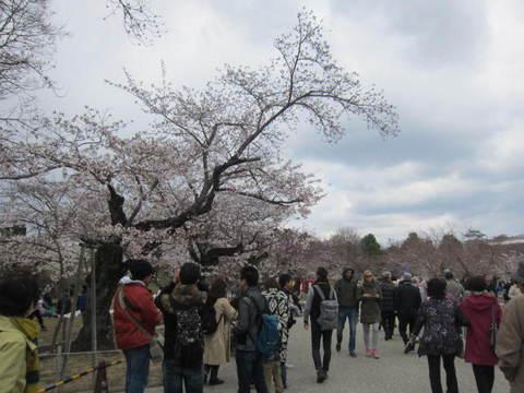 2の7姫路城内桜.JPG