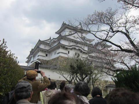 2の7姫路城櫓と桜.JPG
