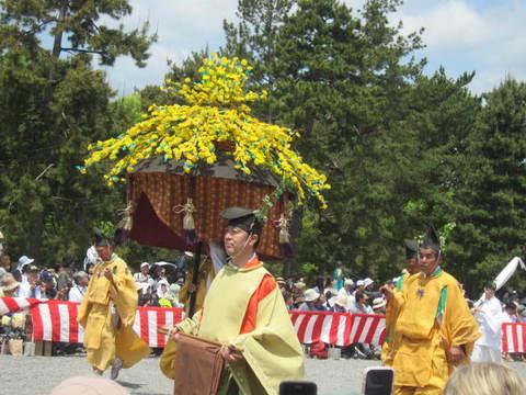 3・祭り9花傘ヤマブキ.JPG