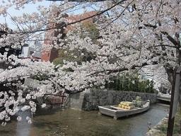 3・高瀬川桜と舟.JPG