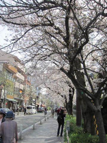 3・高瀬川桜並木.JPG