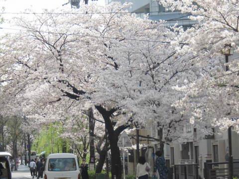 3・高瀬川桜2.JPG
